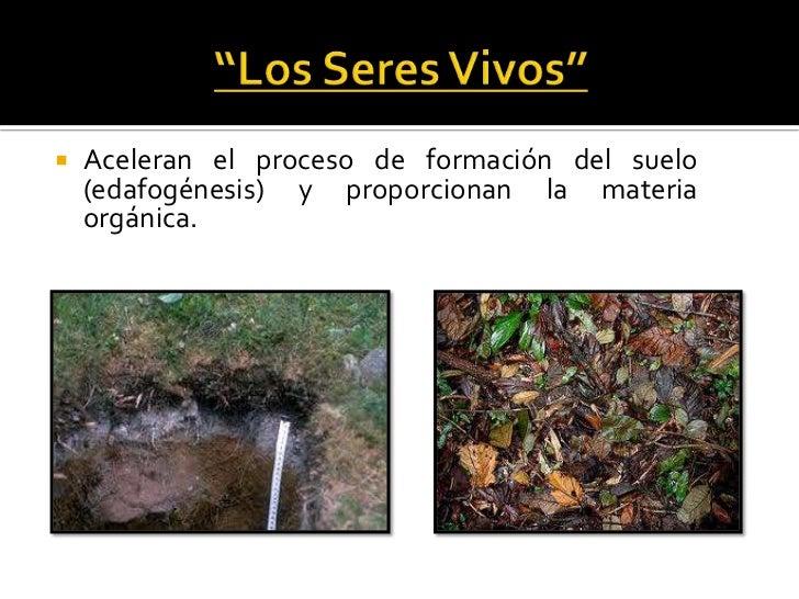 Suelos for Proceso de formacion del suelo