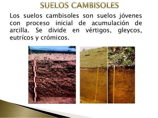 Suelos for Caracteristicas de los suelos
