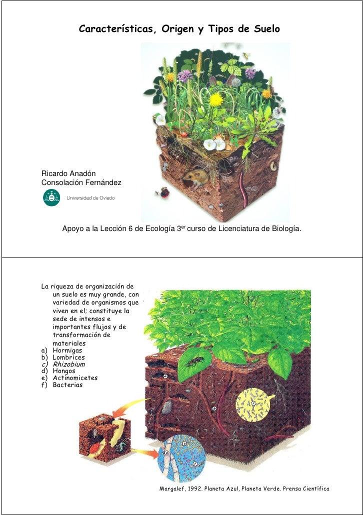 Características, Origen y Tipos de SueloRicardo AnadónConsolación Fernández      Apoyo a la Lección 6 de Ecología 3er curs...