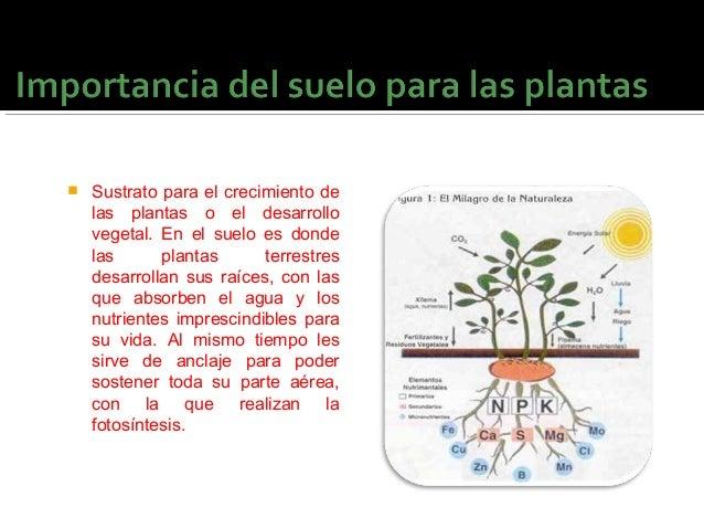 La importancia del suelo for Importancia de los suelos
