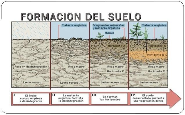 Suelos for Como se forma y desarrolla el suelo