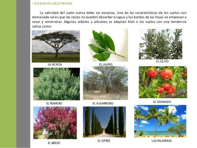 Suelos y plantas for Como se llaman las plantas ornamentales