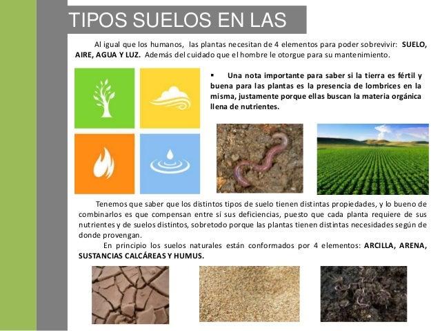 Suelos y plantas for Tipos de revestimientos para suelos