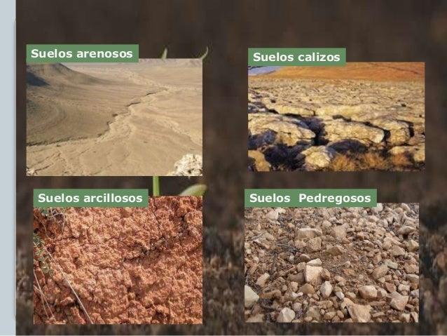 Suelos y plantas paisajismio for Suelos y tipos de suelos