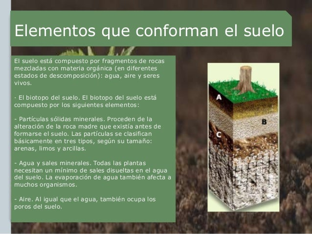 Suelos y plantas paisajismio for Componentes quimicos del suelo