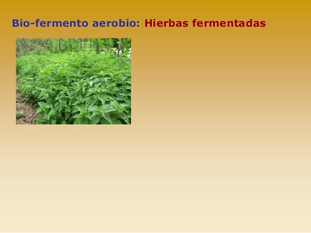Fertilidad del suelo yahoo dating 5