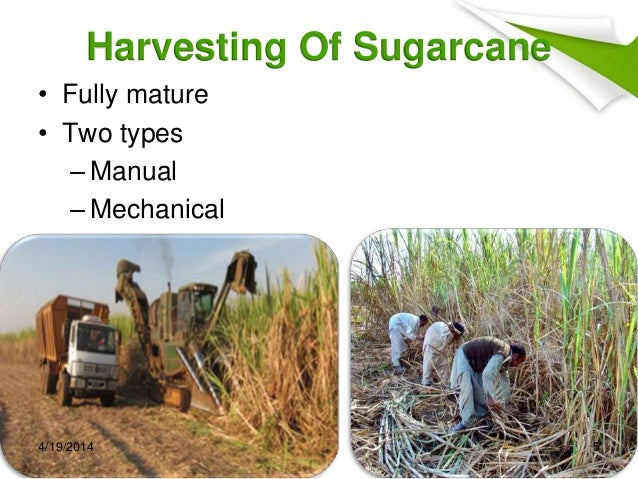 Sugar Manufacturing Process