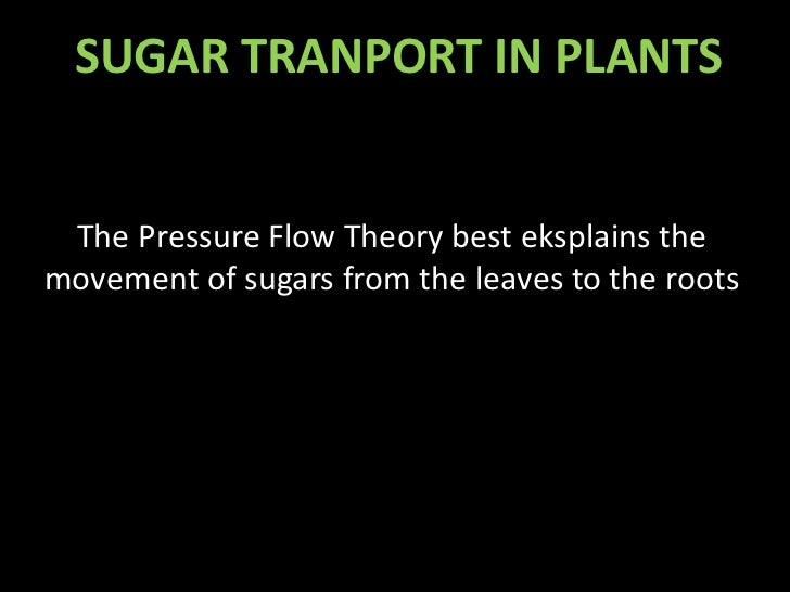 SUGAR TRANPORT IN PLANTS The Pressure Flow Theory best eksplains themovement of sugars from the leaves to the roots
