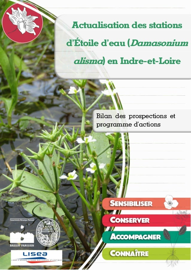 Actualisation des stations d'Étoile d'eau (Damasonium alisma) en Indre-et-Loire Théo EMERIAU, Nicolas ROBOÜAM – novembre 2...