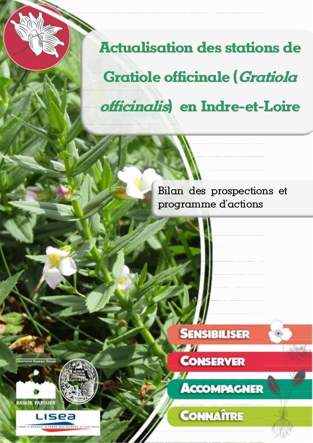 Actualisation des stations de Gratiole officinale (Gratiola officinalis) en Indre-et-Loire Théo EMERIAU, Nicolas ROBOÜAM –...