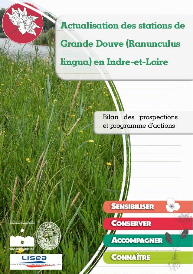 Actualisation des stations de Grande Douve (Ranunculus lingua) en Indre-et-Loire Théo EMERIAU, Nicolas ROBOÜAM – novembre ...