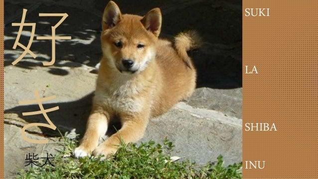 好 き柴犬 SUKI LA SHIBA INU