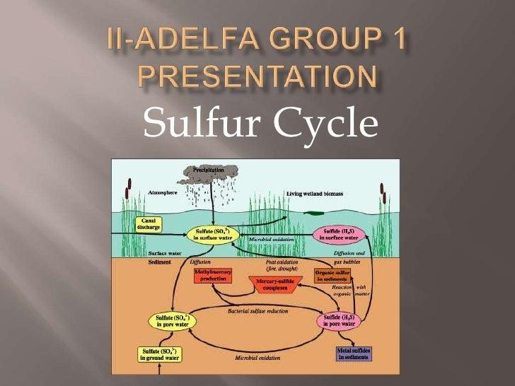 II-Adelfa Group 1 Presentation<br />Sulfur Cycle<br />