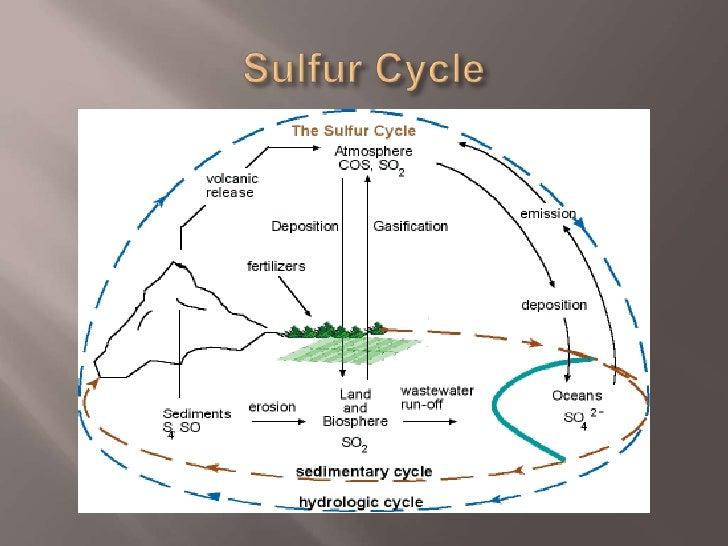 Sulfur cycle Slide 3