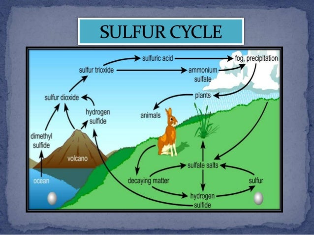 "Search Results for ""The Water Cycle"" – Calendar 2015"