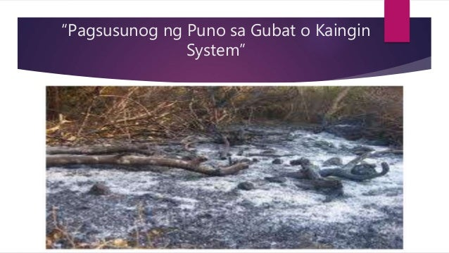 ano ang kaingin Slash and burn agriculture is a widely used method of growing food in which wild or forested land is clear cut and any remaining vegetation burned.