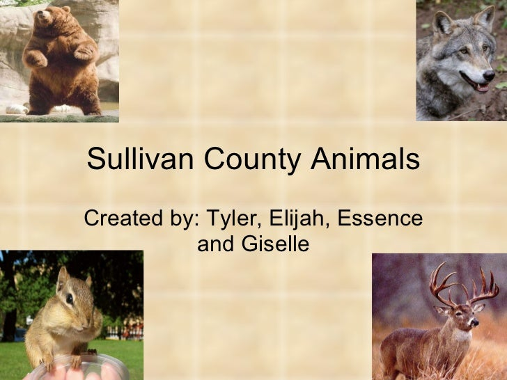 Sullivan County Animals Created by: Tyler, Elijah, Essence and Giselle