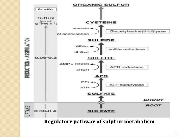 pdf das zittern seine erscheinungsformen seine pathogenese und klinische