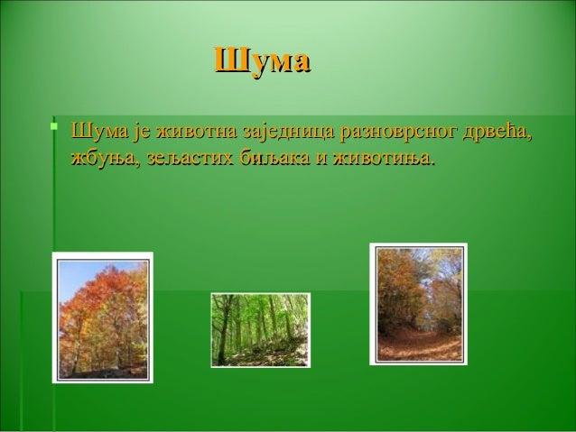 ШШууммaa   ШШууммаа јјее жжииввооттннаа ззаајјееддннииццаа ррааззннооввррсснноогг ддррввеећћаа,,  жжббууњњаа,, ззеељљаасс...