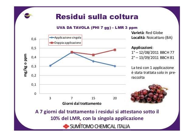 Sumitomo fmv 2012 - Red globe uva da tavola ...