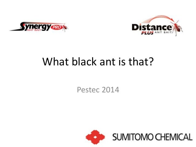 What black ant is that?  Pestec 2014