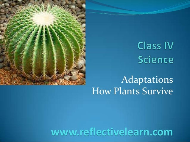 Adaptations How Plants Survive www.reflectivelearn.com