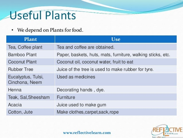 Class Iv Science Plants Adaptation