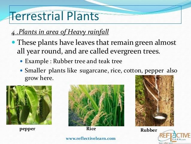 terrestrial plants chart