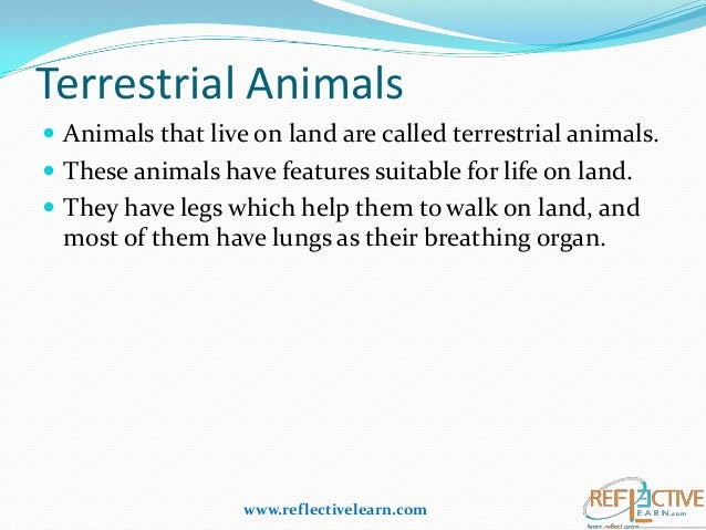 adaptive features of animals in aquatic Ap-biology essay on vertebrate structural adaptations for terrestrial life  of  animals on land are very different from those of survival of animals in aquatic.
