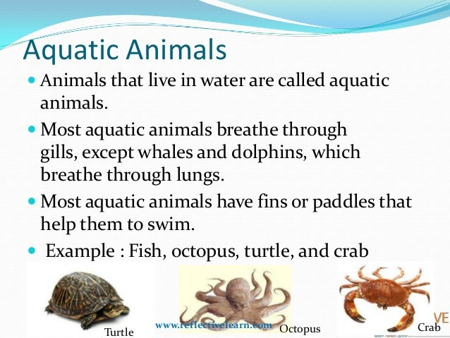 Class IV - Adaptations-How Animals Survive