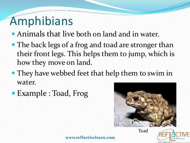 adaptation of animals in different habitats