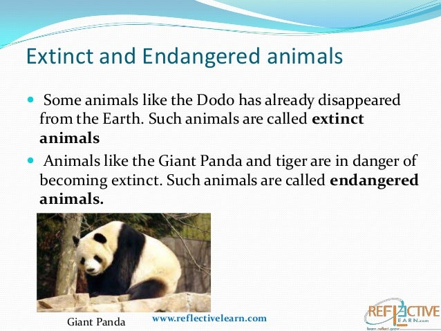 wildlife extinction essay Read this social issues essay and over 87,000 other research documents extinction across the pacific ocean, to indonesia, and through the once extensive rainforest.