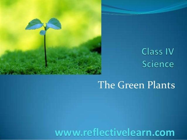 The Green Plants www.reflectivelearn.com