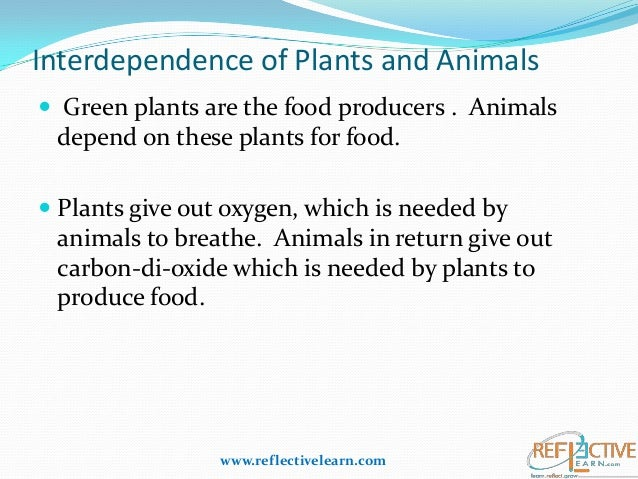 interdependence of plants animals Interdependence definition, the quality or condition of being interdependent, or mutually reliant on each other: globalization of economies leads to an ever.