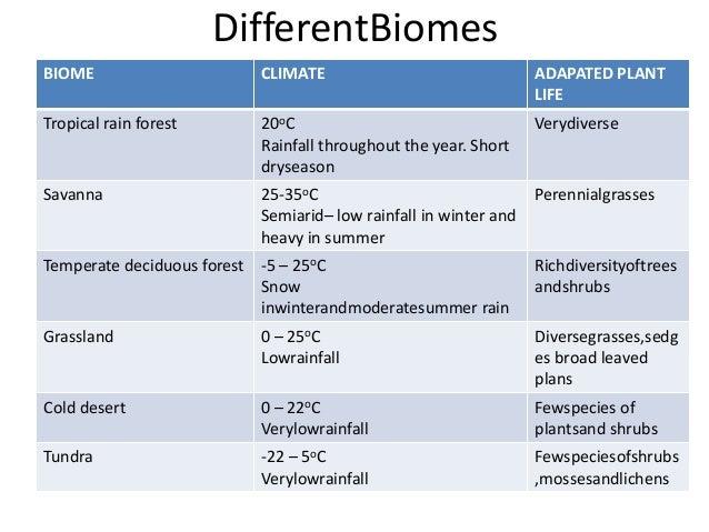 tropical rainforest summary
