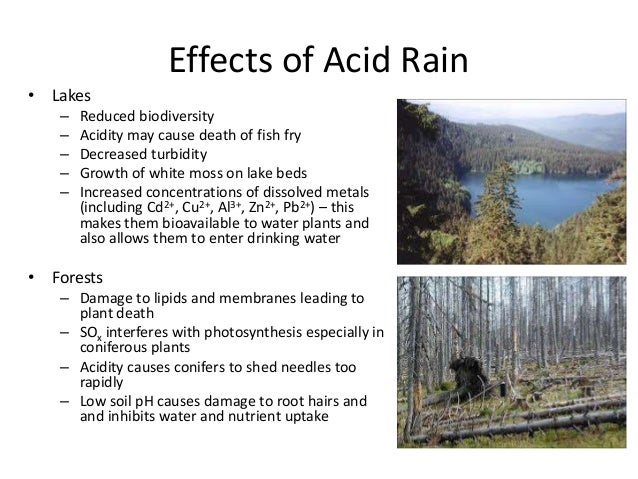 an overview of causes effects and cost of acid rain on the environment It also causes the death of forests, reduces the fertility of soil, and damages buildings by eating away stonework (the marble on the us capitol in washington, dc has been eroded by.