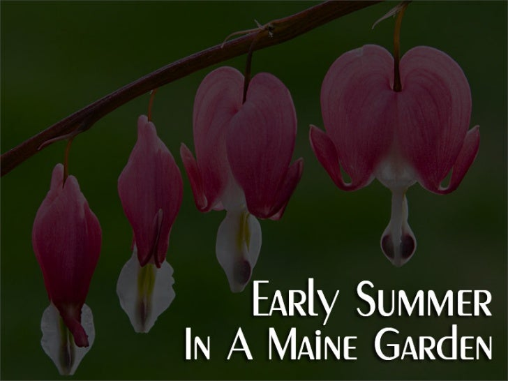 Early Summer In A Maine Garden