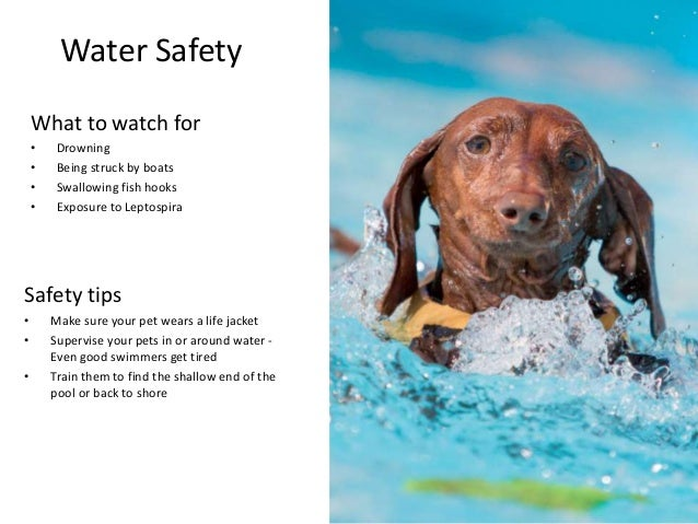 High Risk Car Insurance >> Summer Safety Hazards for Pets
