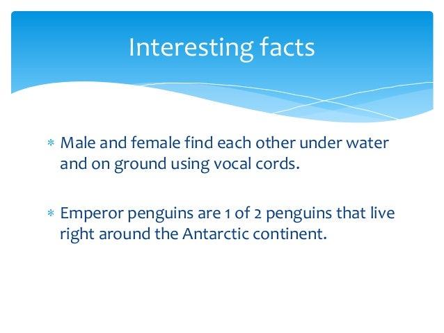 Summers Emperor Penguins