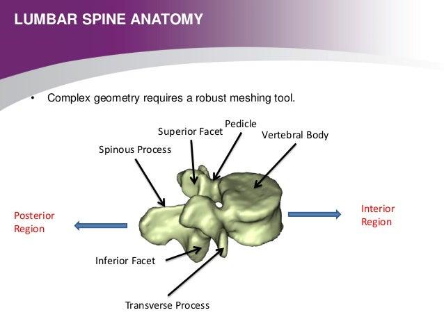 Meshing The Human Lumbar Spine