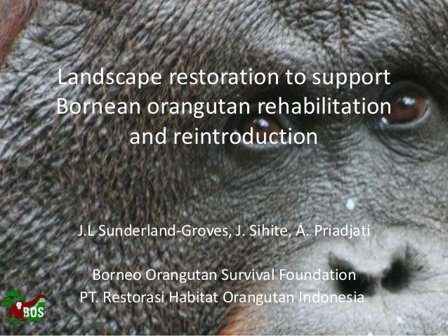 Landscape restoration to support Bornean orangutan rehabilitation and reintroduction J.L Sunderland-Groves, J. Sihite, A. ...