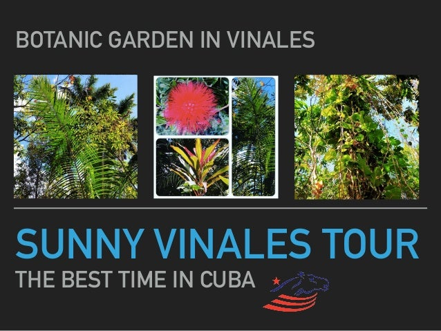 SUNNY VINALES TOUR THE BEST TIME IN CUBA BOTANIC GARDEN IN VINALES