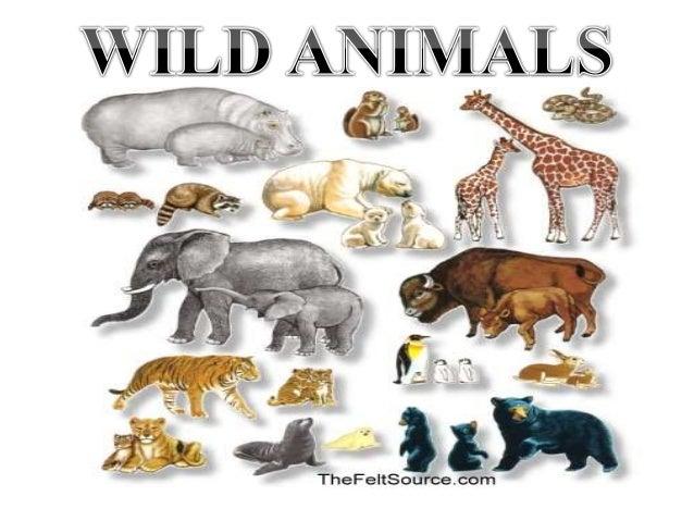 Hayvanlar ile İlgili Sunu