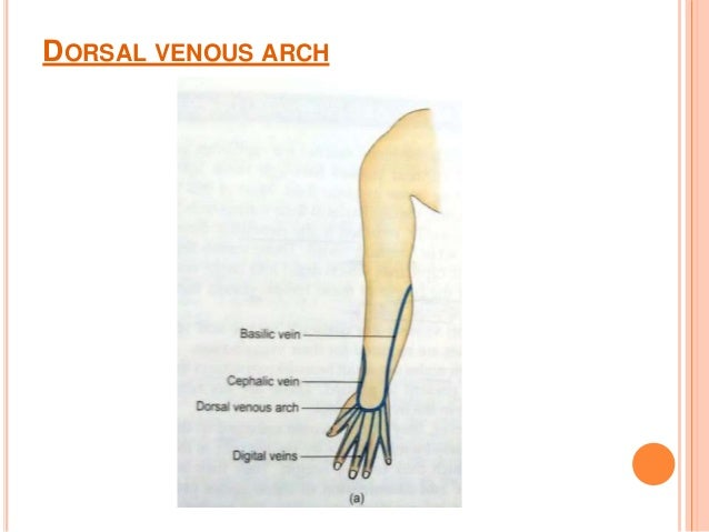 venous & lymphatic drainage of upper limb, Cephalic Vein
