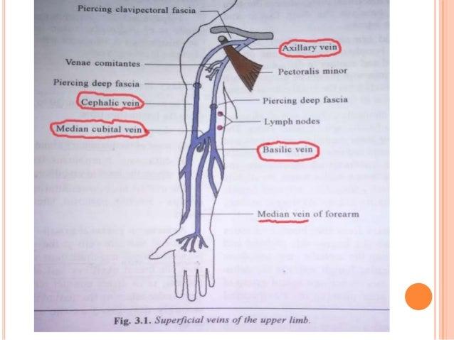 venous & lymphatic drainage of upper limb