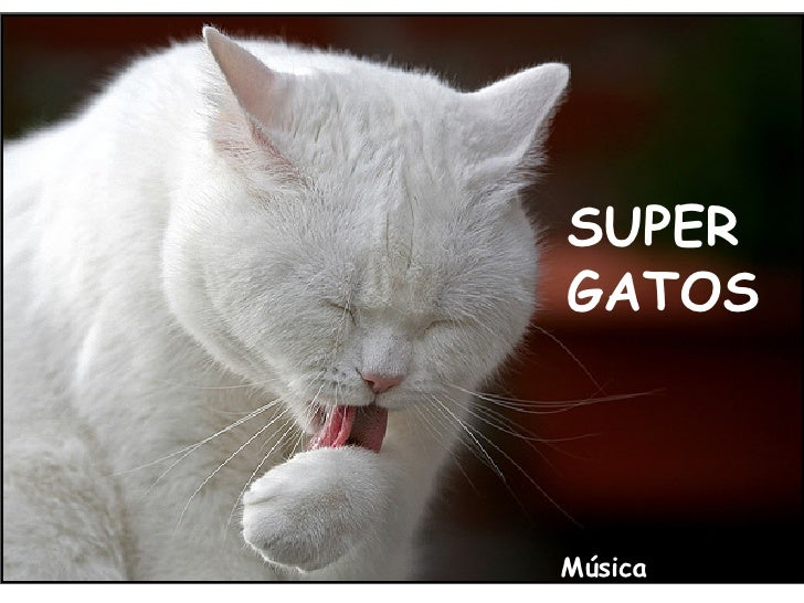 SUPER GATOS Música