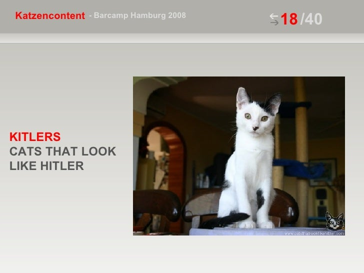 /40 KITLERS  CATS THAT LOOK LIKE HITLER