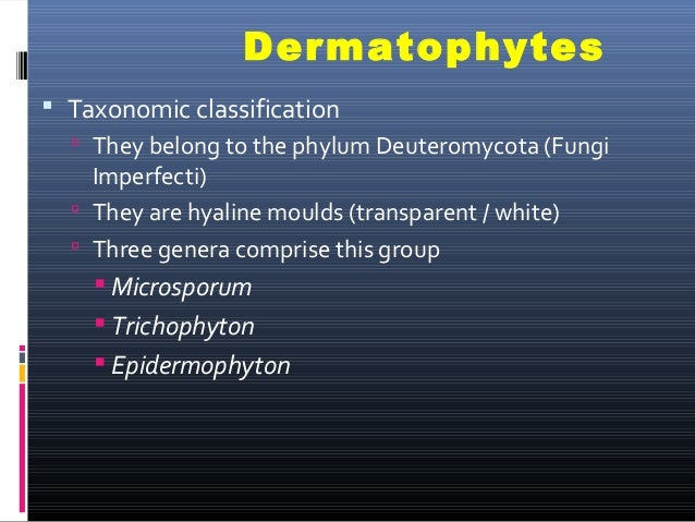 Dermatophyte - Wikipedia