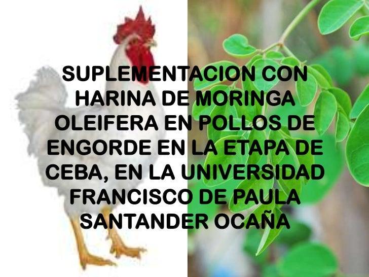 SUPLEMENTACION CON HARINA DE MORINGA OLEIFERA EN POLLOS DE ENGORDE EN LA ETAPA DE CEBA, EN LA UNIVERSIDAD FRANCISCO DE PAU...