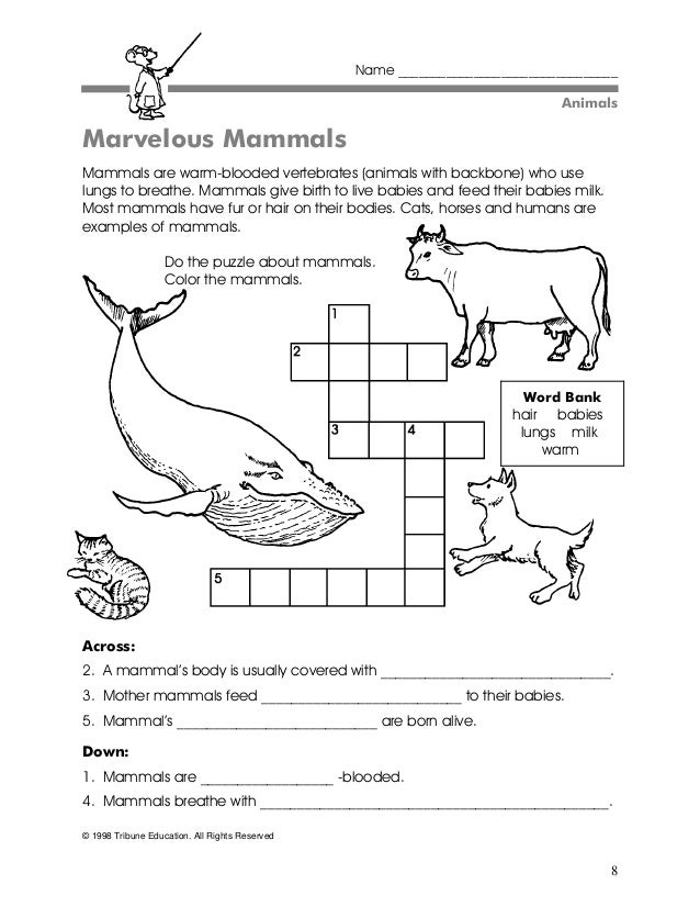 Supo gr2 scienceactivities1 – Vertebrate Worksheet